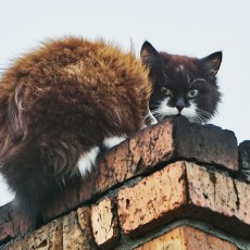 chimney-sweep-inspection